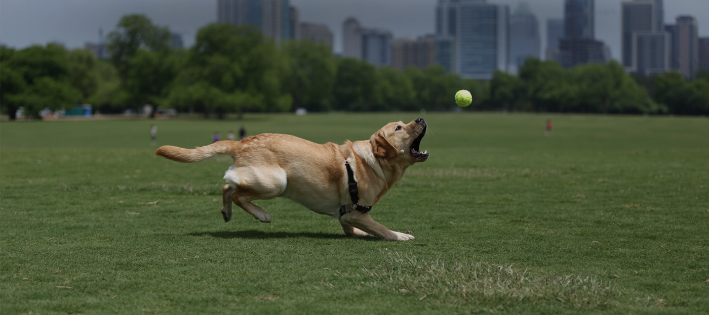 Redmark Kennels Dog Training And Boarding In Austin Texas